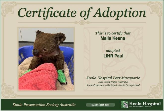Koala Hospital NSW